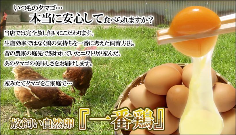 放し飼い自然卵一番鶏